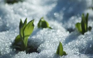 snow spring by peehs