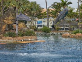 STOCK - Seaworld 2013-20 by fillyrox