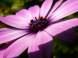 Pink Flower 2 by RiverW
