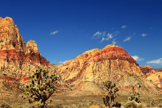 Mountains and Cacti by Celem