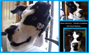 Border Collie W.I.P. by RiiThePup