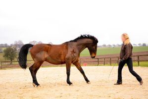 Free Dressage- Attacking Wild Horse II by LuDa-Stock