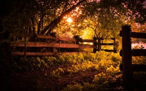 Sunset unflaming upon the leaves... by arjantje