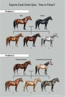 Equine Coat Color Quiz by SheWolff