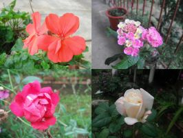 Collage of fllowers by Mai-ChanL