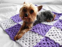 granny square blanket and Bella 2 by Alicia1018