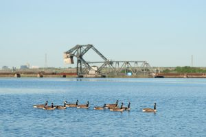 Gaggle on the Hackensack by sullivan1985