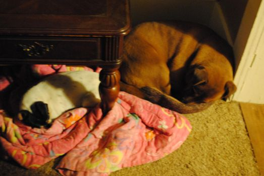 Daisy and Lizzie curled up together by BuffaloHeadroom