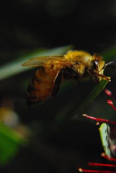 Bee by ifly352