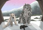 snow leopards by brownwhisker