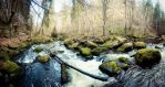 Forest stream 2nd by DanielGliese