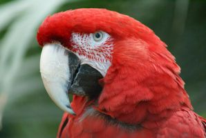 Macaw 005 by MonsterBrand-stock