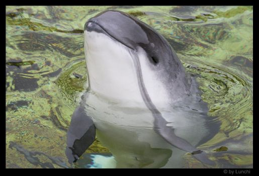 Jordi the porpoise by Lunchi