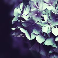 give up on the past by illusionality