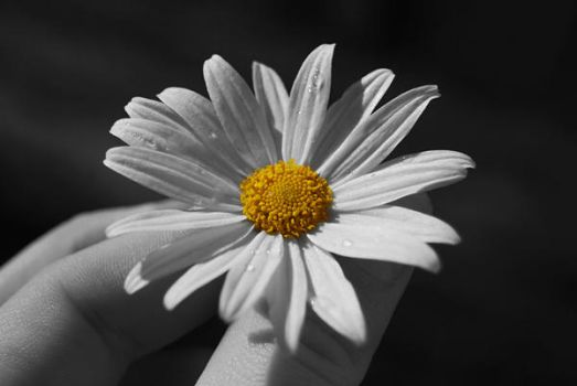 flower bw by nadia-louise