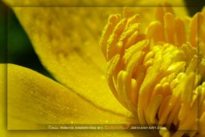 golden flower by Subaru7