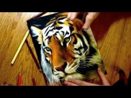 Drawing Realistic Tiger by Heatherrooney