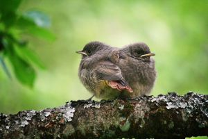 Baby birds by Malleni-Art