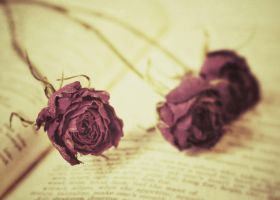 Affection by SeptemberRay