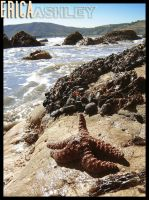 Stars In The Ocean by twigg21