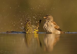 Bath Buddies by MorkelErasmus