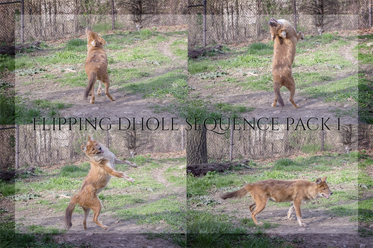 Flipping Dhole Sequence Pack 1 by CastleGraphics