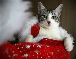 Cats' Santa Claus by ludivyne
