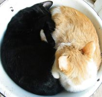 Yin Yang Cats by kbcollins