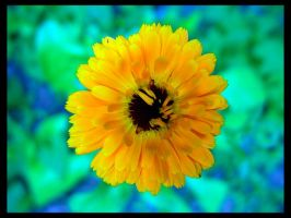 Yellow Flower by deadward1555