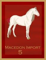 Macedon Import  5 by Secret-Z