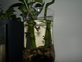 Fancy guppies and live plants 2 by LilWolfStudios