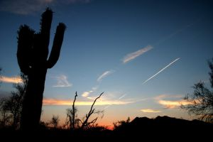 Desert Silhouettes Sunset by Delusionist