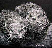 we otter be in pictures by mbeckett