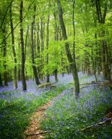 Bluebells in trees by nectar666
