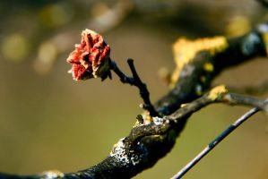 Flower on the Branch by LENA3689