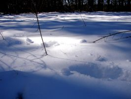 Footprints in the Snow by Artificial-Moonlight