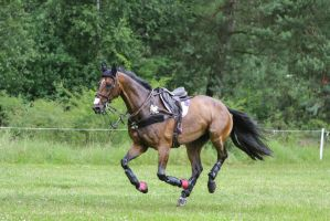 3DE Cross Country Horse on the Loose by LuDa-Stock