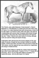 Breed Card Poitevin by Danesippi