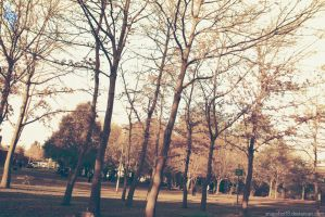 College Trees by snapshot19