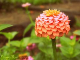 Puffy Flower by Elidya