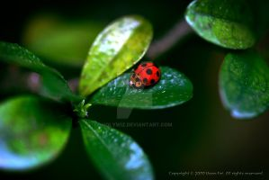 The Red in Greens by HolyWiz