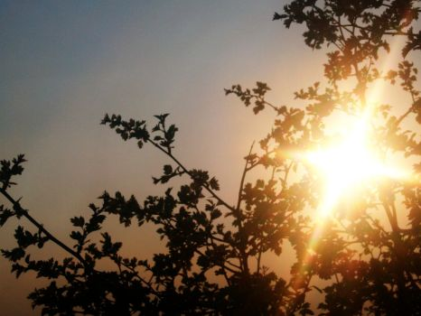 Sunrise between the trees by Antiegone