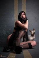 cats by SommerPhotography
