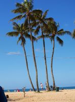 Palm Trees on the Beach I by Squiddgee7734