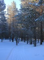 The Sun in the winter woods by Hudojnica