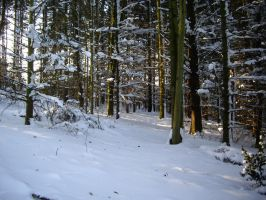 winter forest stock 7 by HumbleBeez