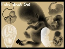 Fetus Brush Set by Cynthetic