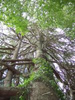 Big Tree 3 by OWTC-Stock