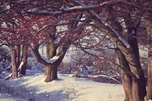 trees in the snow by artmobe
