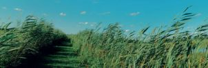 long field - wp by chirilas